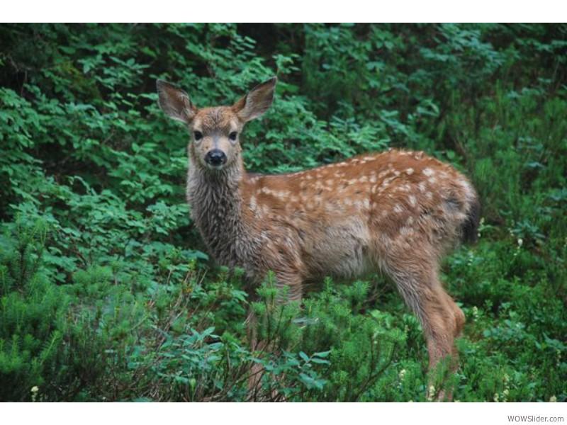 Deer Lake Trail, Oregon